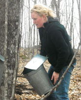 Maple Syrup Tap Bucket