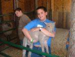 Wilderness Fellowship Animals - Lamb